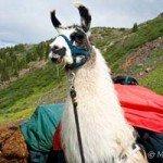 home-llama