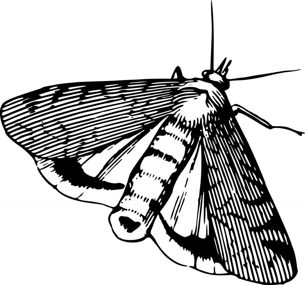 Moth5